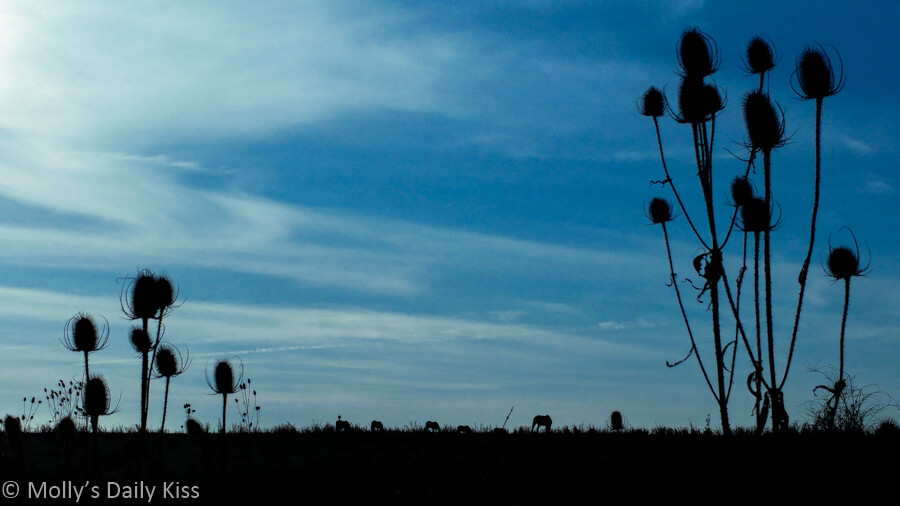 thistles silhouetted against bright blue spring sky