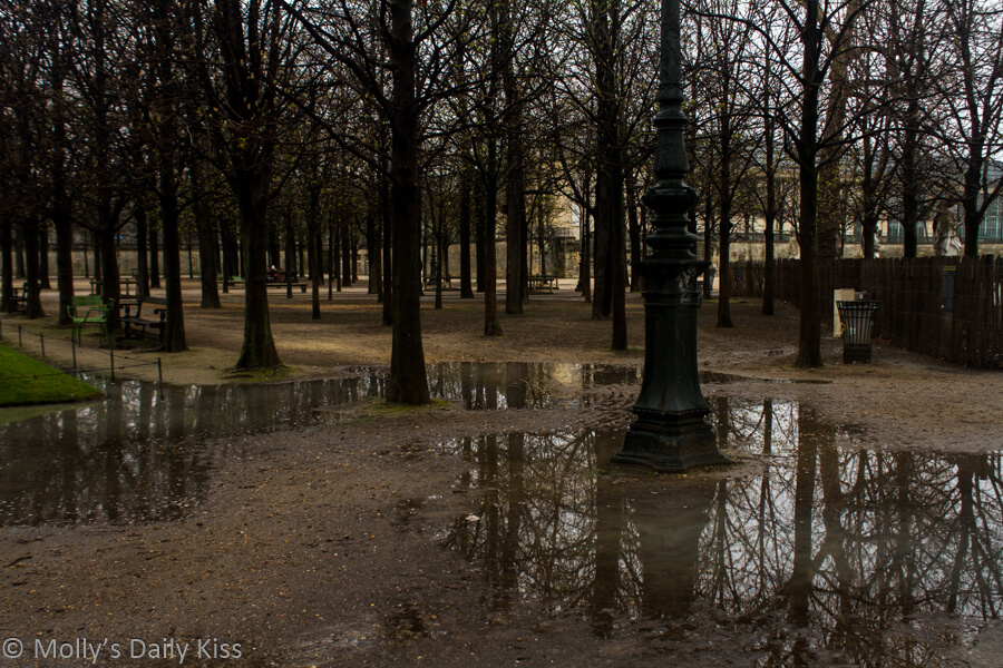 Paris puddles under trees