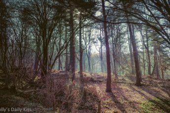 morning sunlight through woodland