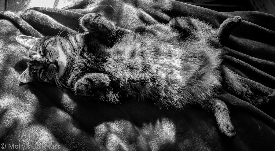 Black and white of tabby cat laying on their back in the sunshine
