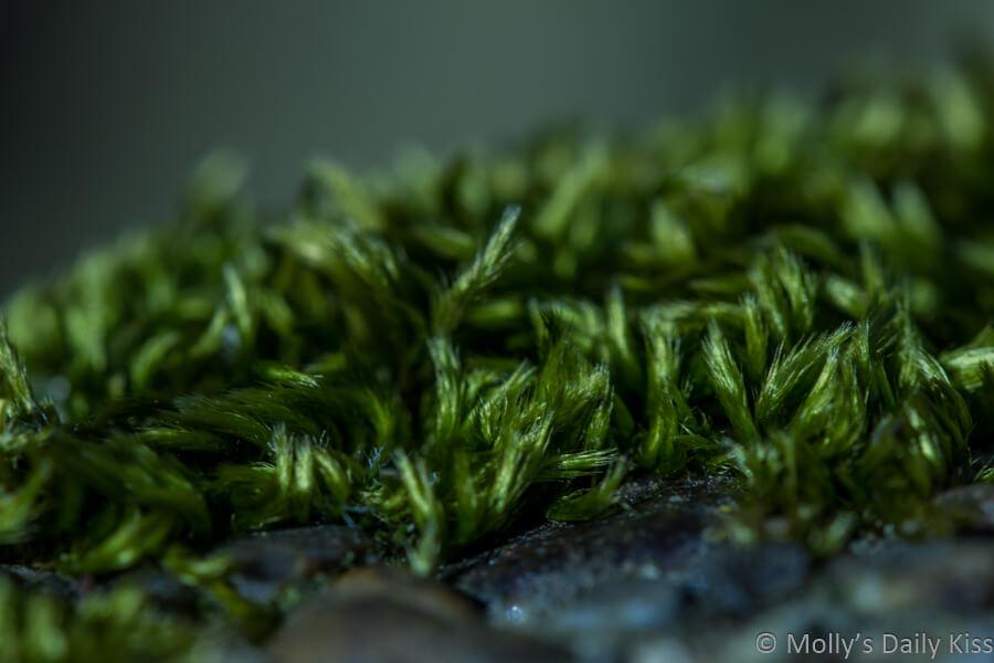 macro shot of green moss