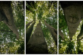 triptych looking up trees