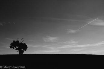 Silhouette of single tree in field with whispy clouds in the sky