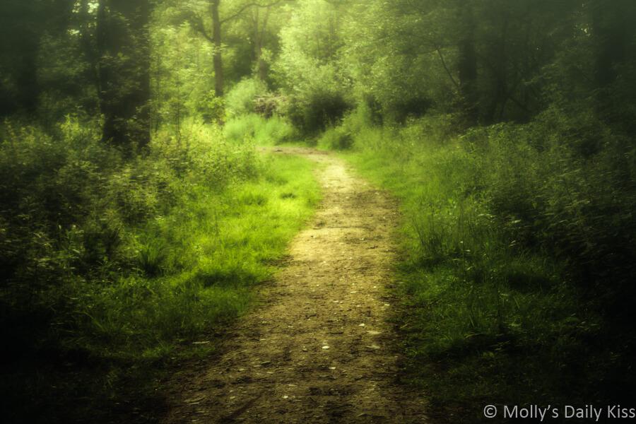 Path through solitary woodland walk