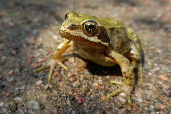 frog sitting on the path