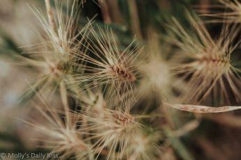 macro shot looking down through grass seed heads