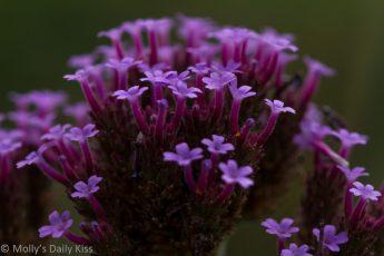 macro shot pf purple flower head