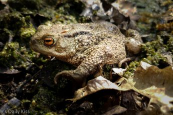 toad in the leaves