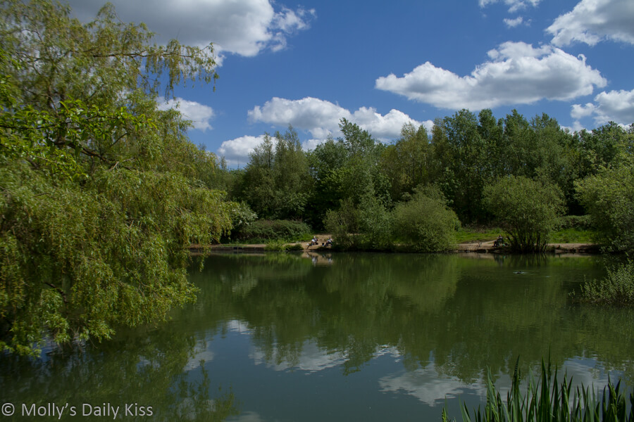 clouds and trees reflected in pond