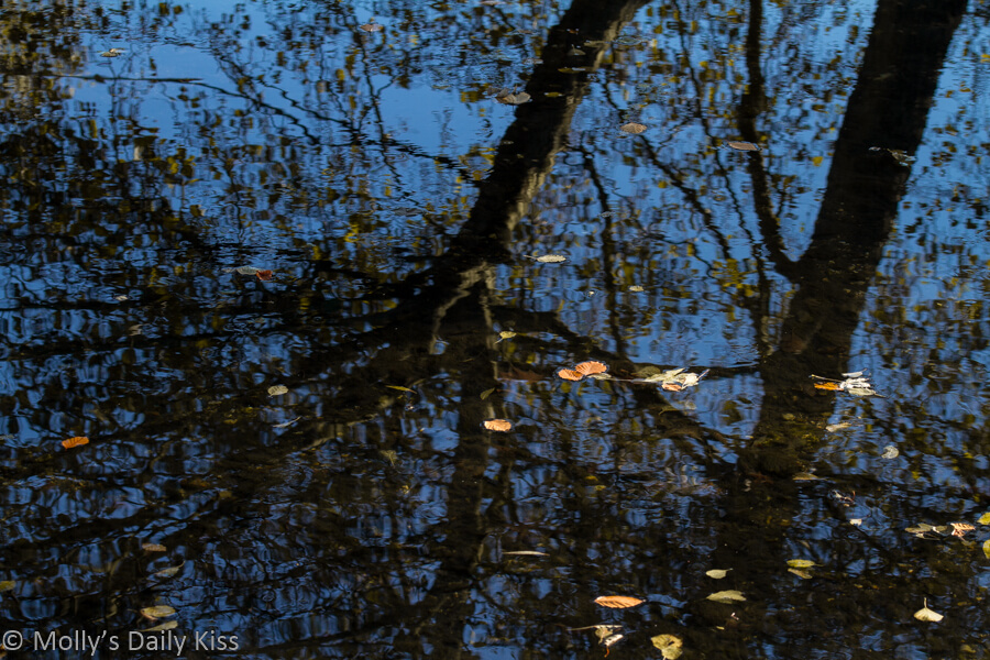 Trees reflected in stream