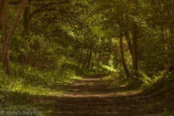 Autumn september sunlight along wooded path