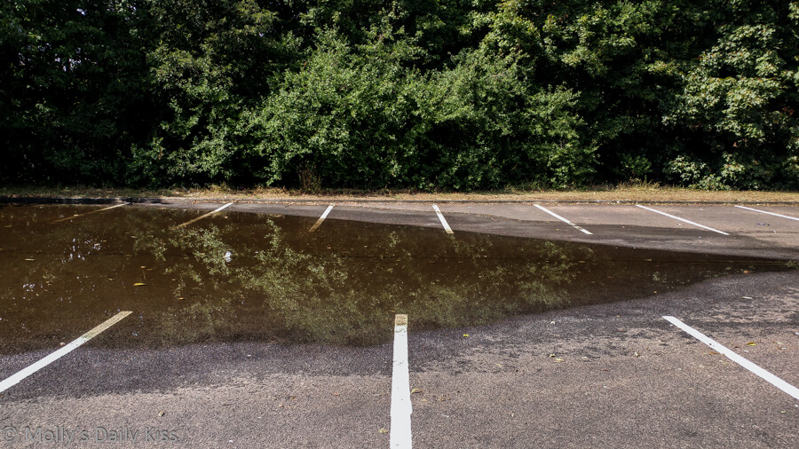 Mirror reflection of trees in puddle