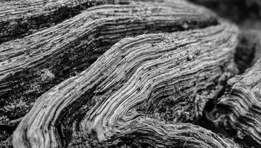 swirls in a old piece of wood edited in black and white