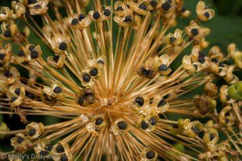 seeds head