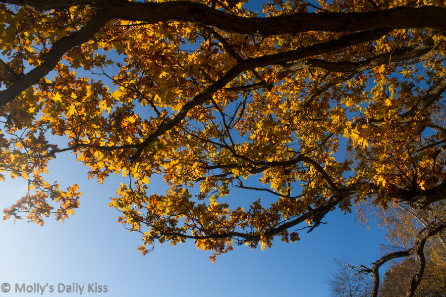 looking up through autumn leaves at blue sky that paints the sky