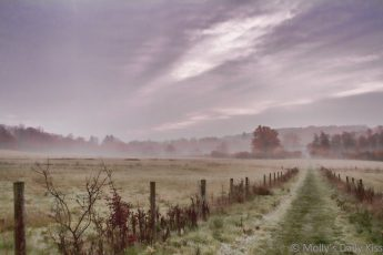 Misty mornings over autumn fields and trees