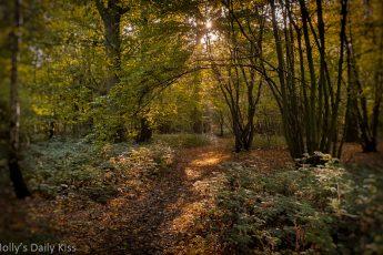 autumn woodland path with sunlight through trees