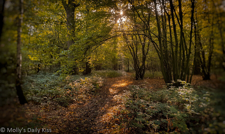 autumn woodland path with sunlight through trees