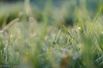 sunlight through frost grass