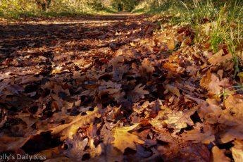 golden fallen leaves on the path in sunlight