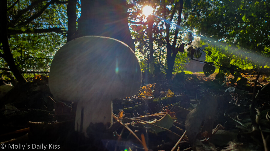 sunlight through trees with musroom fungi in the foreground