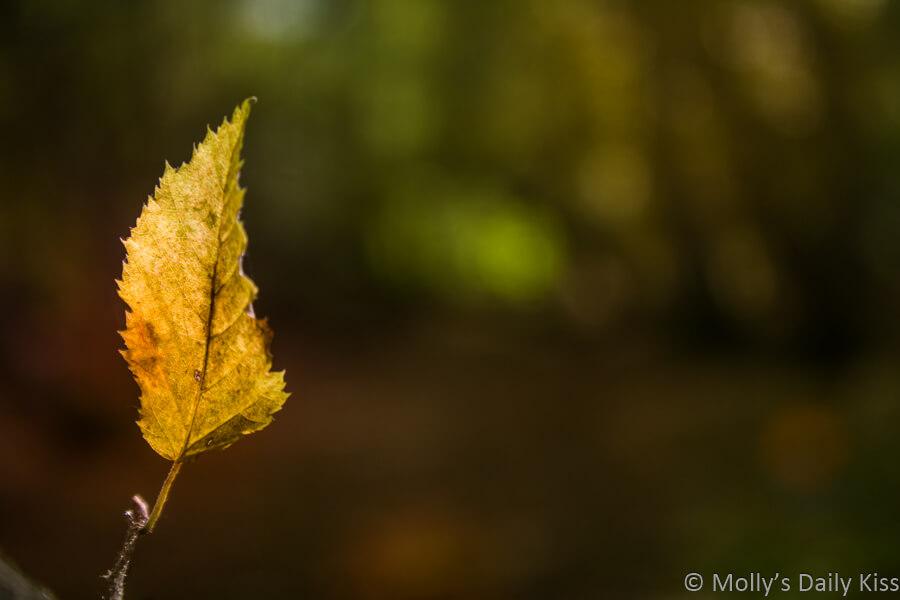 single leaf on tree in wood