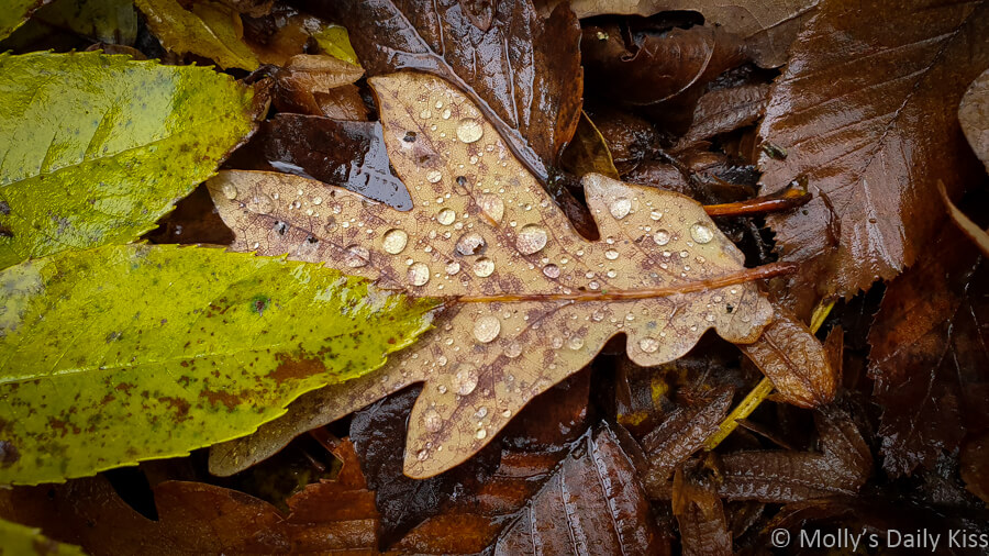 droplets of water on autumn leaf on the ground is a prophecy of spring