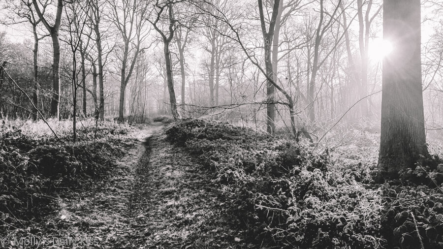 frost-mailed warrior covers woodlands in white frost edited in black and white