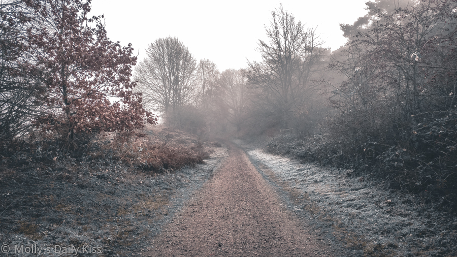 frost on pathway with last of autumn leaves haning to trees