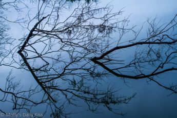 branches in water reflected