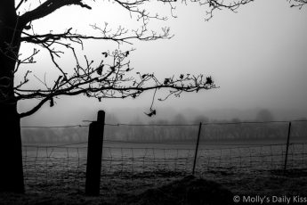 Winter tree and fence looking over misty winter fields