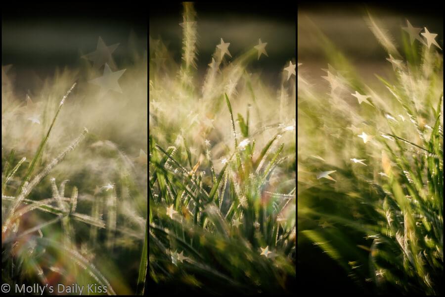 starburst bokeh triptych of sun through frost grass
