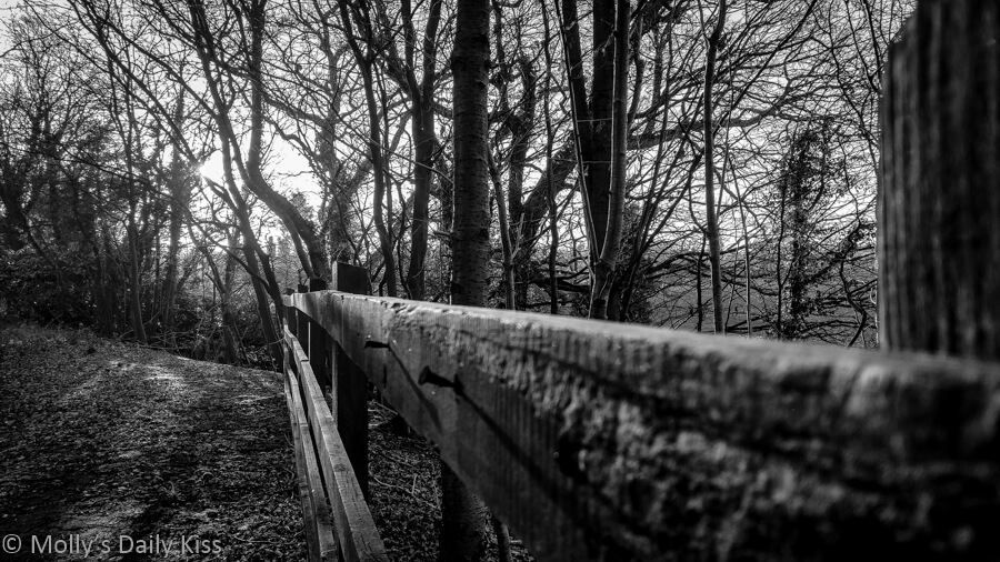 looking along fence to winter sun in trees edited in black and white