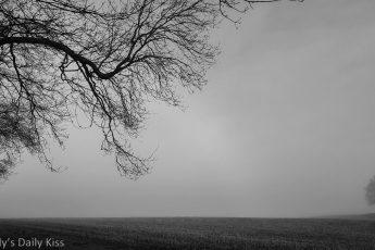 misty morning over fields