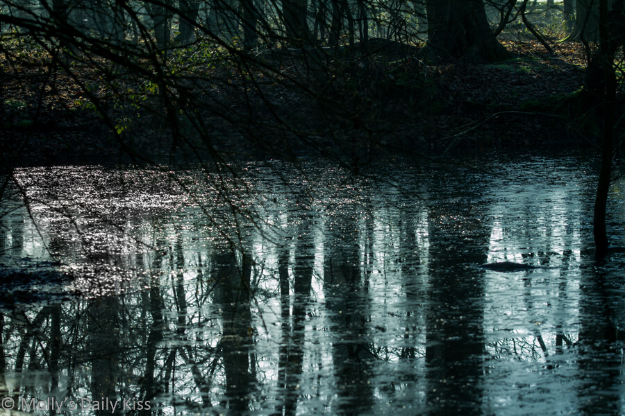 dark winter trees reflected in ice pond during february uncertain month