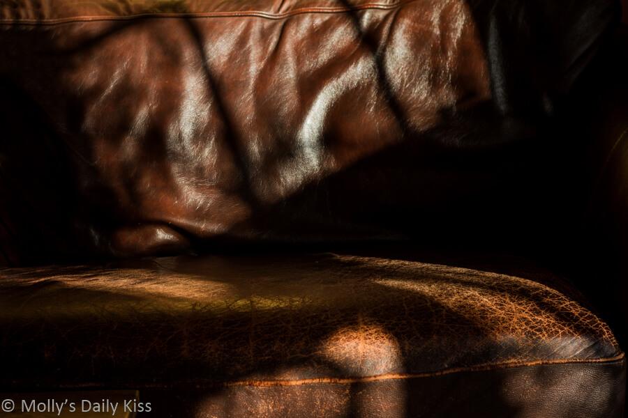 sunny spot on the sofa