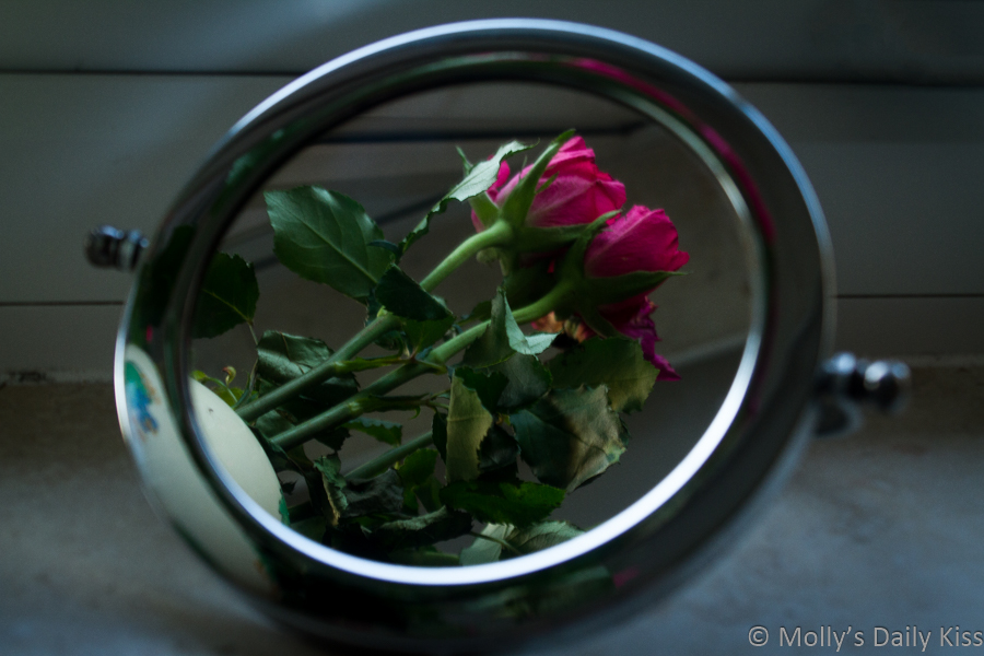Red roses reflected in circular mirror