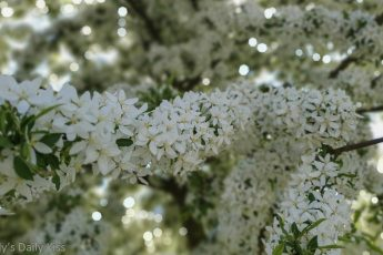 White flowers blossoming recklessly