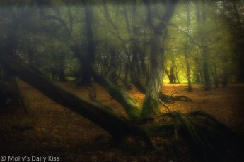 Autumnal sunlight in woods