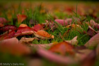 Red leaves on grass