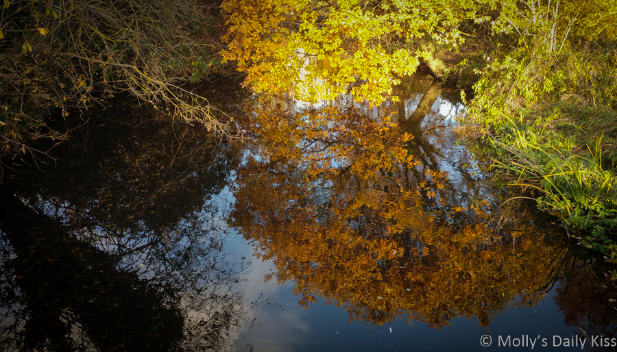fine october trees reflected in water