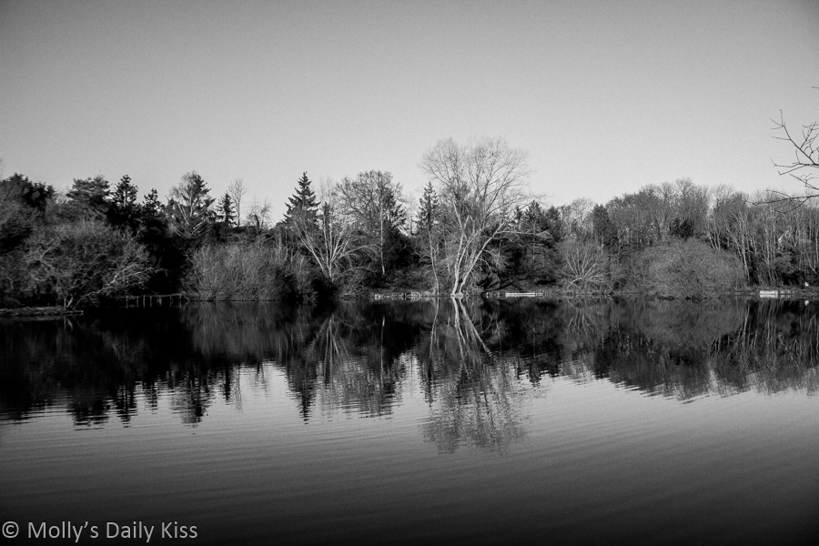 trees reflected in water is the hidden depth of nature