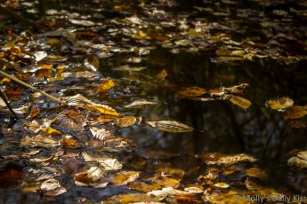 leaves laying on surface of water with trees reflected in the the water is all maternal earth