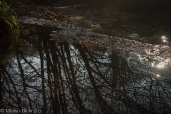 stream through woodland with tree reflected in water is grand and beautiful