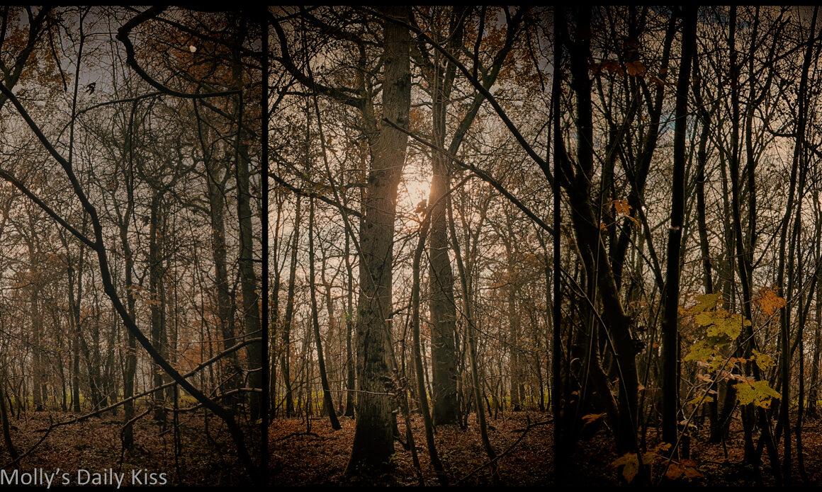 winter woodland triptych