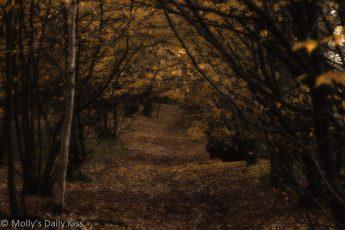 autumn woods pathway