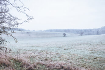 Cold white fields under frost in the morning