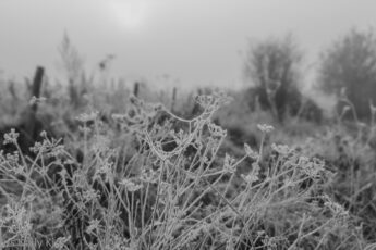 Welcome frost on side of path covering grass and seed heads