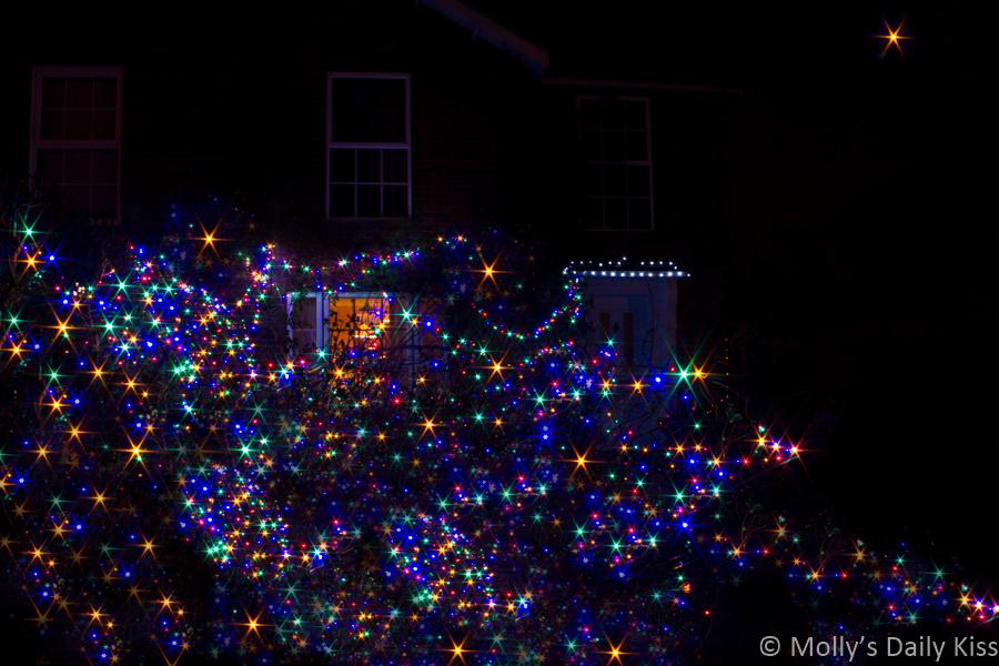 All the lights christmas lights