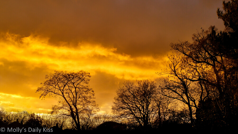 Sky ablaze with Orange sunset through winter trees